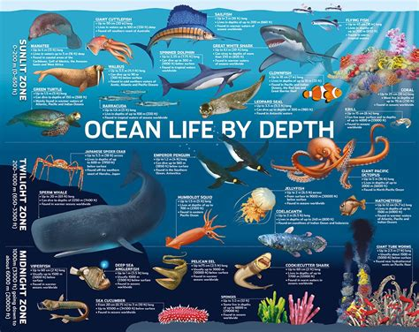Giant Squids: Find out about their characteristics and