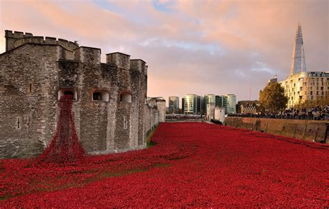 20 Jaw-Dropping Red Poppy Photos In Honor Of Remembrance